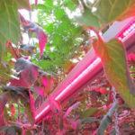 Светодиоды для растений