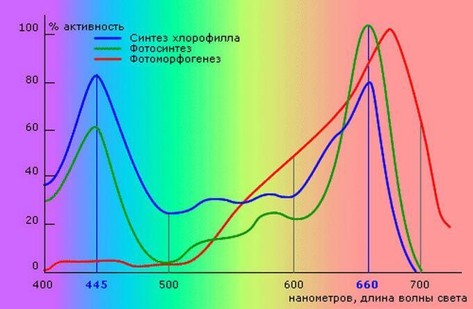 спектр для растения